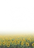 Галерея бумаги, 100 гр, уп/50  Vincent