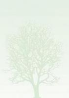 Галерея бумаги, 100 гр, уп/50 Drzewo
